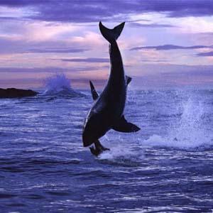 """Động vật """"khoe sắc"""" dưới biển sâu"""