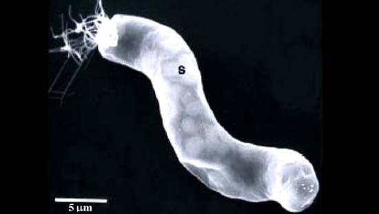 Nhà khoa học NASA tìm thấy sự sống trong vũ trụ