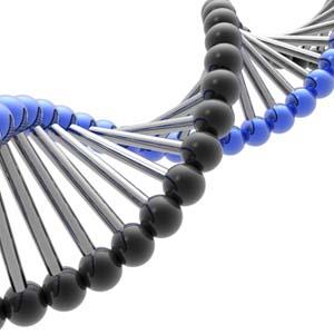 Trí thông minh không chỉ do di truyền