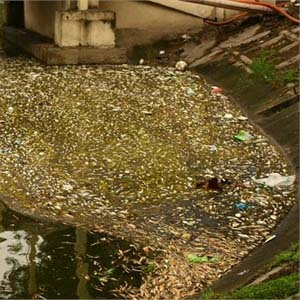 Tìm hiểu nguyên nhân cá chết tại hồ Thiền Quang