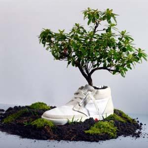 Giày phân hủy sinh học