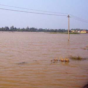Khí hậu Việt Nam đang trở nên dị thường