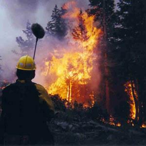 16 tỉnh có nguy cơ cháy rừng cấp cực kỳ nguy hiểm