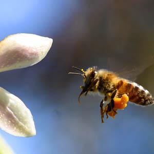 Liên Hợp Quốc kêu gọi thế giới cứu ong