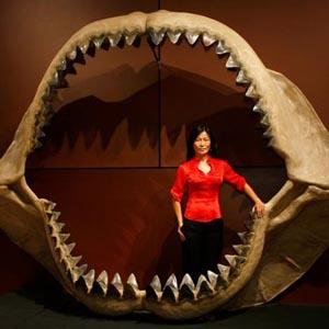 Tìm thấy hàm răng cá mập khổng lồ