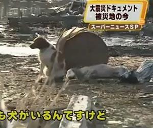 Video: Chú chó chăm sóc bạn bị thương sau động đất