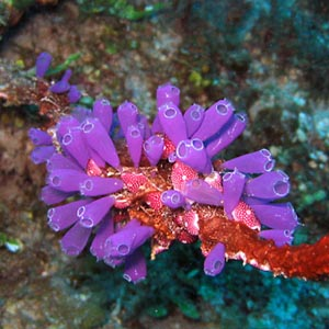 Điều trị chấn thương nhờ sinh vật biển