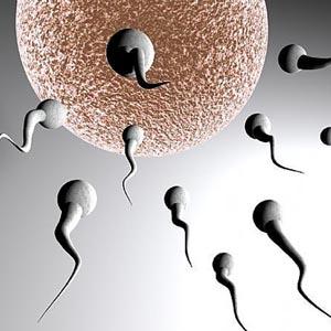 Nuôi thành công tinh trùng trong ống nghiệm