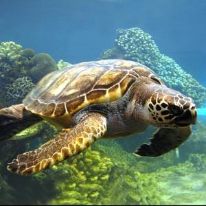 Rác nhựa có thể khiến rùa biển tuyệt chủng