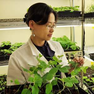Khả năng chống chọi bệnh tật thần kỳ của thực vật
