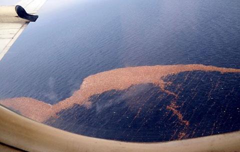 Rác sóng thần Nhật tới Hawaii