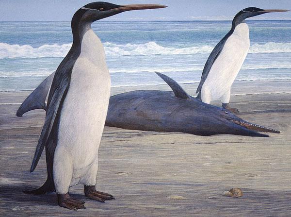 Chân dung hai con chim cánh cụt Kairuku đứng bên cạnh một con cá heo Waipatiabị mắc cạn