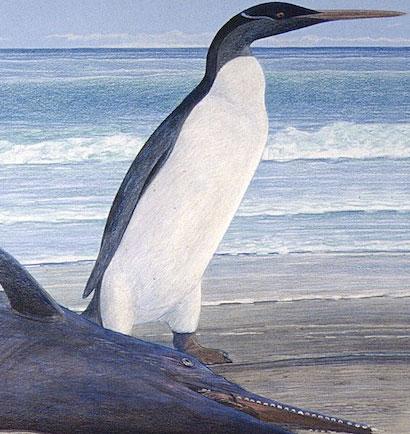 Chân dung chim cánh cụt đã tuyệt chủng 25 triệu năm