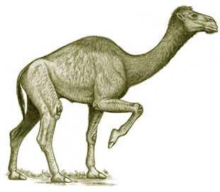 Phát hiện lạc đà tuyệt chủng có mõm giống cá sấu