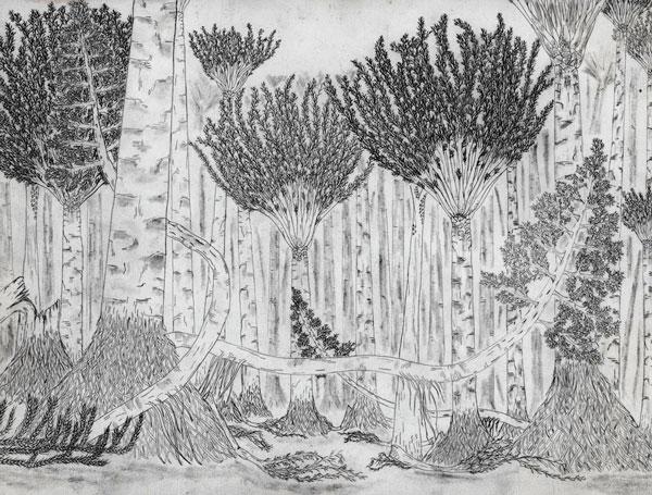 Cấu trúc của khu rừng cổ đại.