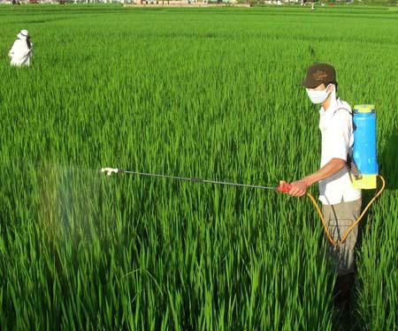 Hoạt động nông nghiệp gây phát thải khí nhà kính cao