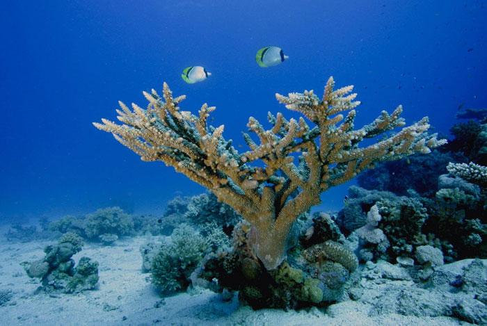 Đại dương đang bị axít hóa với tốc độ nhanh nhất