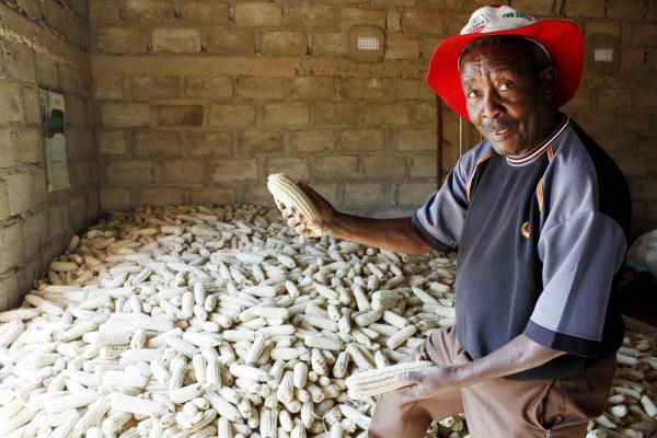 Châu Phi tăng năng suất cây trồng nhờ mối và kiến