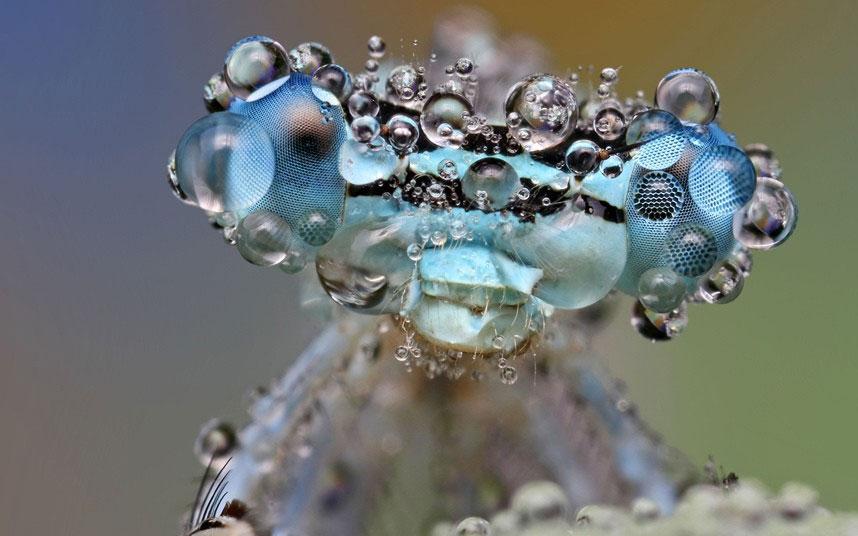 Ảnh đẹp: Côn trùng long lanh trong sương sớm