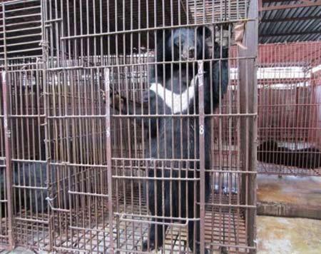 Thả 7 gấu đen ở Đồng Nai về tự nhiên