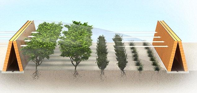 Trồng rừng trên… sa mạc