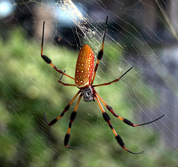 Tơ nhện dẫn nhiệt tốt nhất