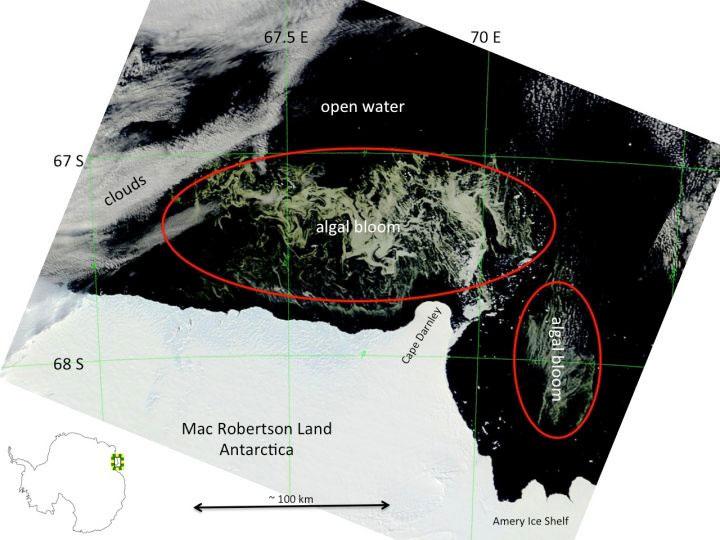 Đám tảo khổng lồ bao vây Nam Cực
