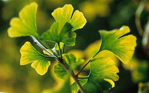 """Ngắm các bậc """"trưởng lão"""" trong thế giới thực vật"""