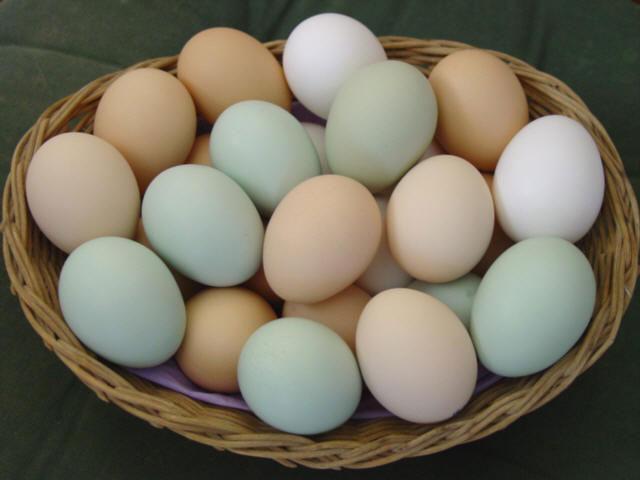 Trứng là nguồn cung cấp năng lượng tốt nhất