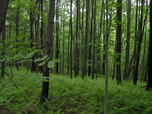 Phấn đấu nâng độ che phủ rừng lên 45% vào 2020