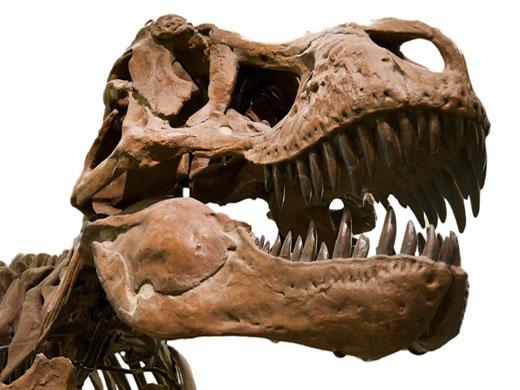 """""""Nụ cười chết chóc"""" của khủng long bạo chúa"""