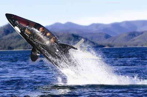 Video: Tàu ngầm cá voi