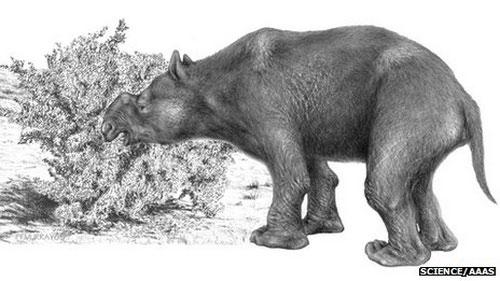 """Các loài thú lớn Úc tuyệt chủng """"do con người"""""""
