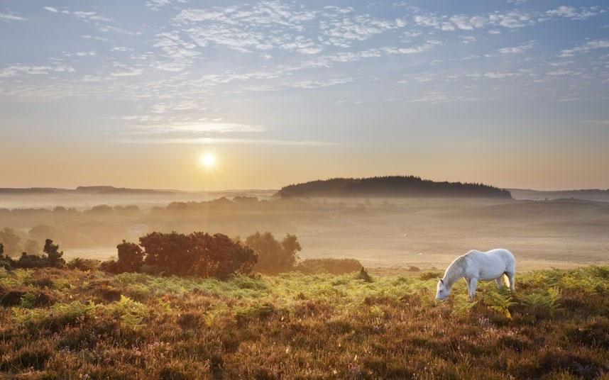 Một chú ngựa trắng nhởn nhơ gặm cỏ dưới ánh bình minh tại Latchmore Bottom.