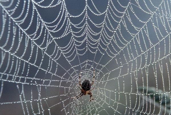 Tại sao loài nhện lại không bị mắc vào lưới của chính chúng?