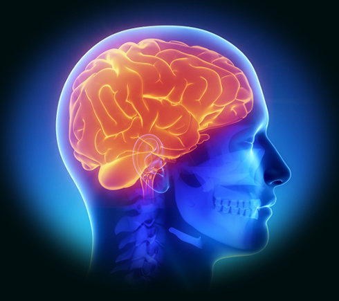 Hình chụp não người