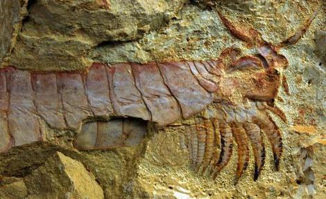 Đây là một trong những hóa thạch sống lâu đời nhất được con người tìm thấy.