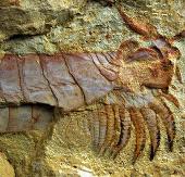 Phát hiện hóa thạch sinh vật 500 triệu tuổi