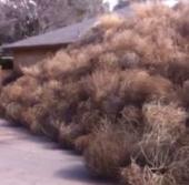 """Video: Cỏ ma """"nuốt chửng"""" căn nhà trên sa mạc"""