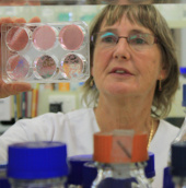 Australia sản xuất thuốc chống cúm mới hiệu quả cao