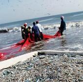 Interpol ngăn chặn đánh bắt cá bất hợp pháp ở Thái Bình Dương