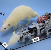 Chuột robot chuyên gây trầm cảm cho chuột thật