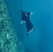 """Video: Bộ đồ lặn """"đôi cánh đại dương"""""""