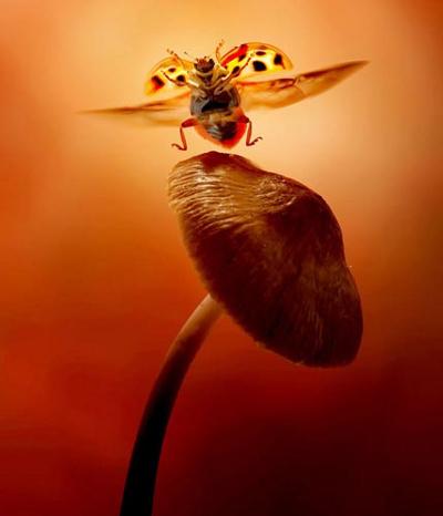 """Bọ cánh cứng sắp đậu trên một cây nấm. """"Tôi rất hài lòng với bức ảnh này, và tôi cho rằng tôi sẽ không bao giờ có thể chụp được một bức ảnh tương tự""""- Bass Leon nói."""