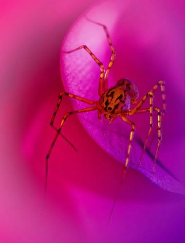 Một chú nhện đang bò trên một cánh hoa.