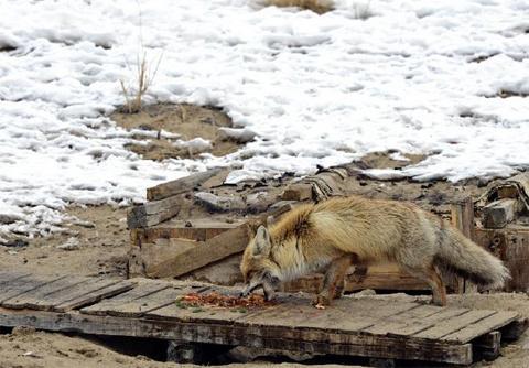 Các công nhân chào đón và chia bớt thức ăn cho nó.