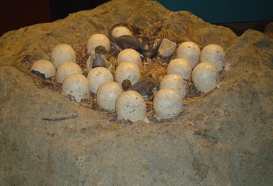"""Loài khủng long mỏ vịt có thể đã nuôi lũ con của chúng bằng """"sữa""""."""