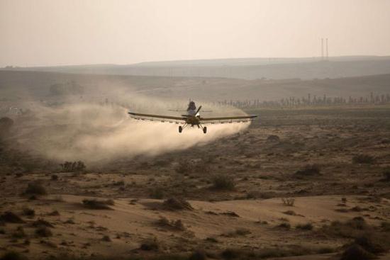 Một máy bay phun thuốc trừ sâu trên sa mạc Negev để diệt châu chấu vào ngày 6/3.