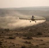 """Quân đội Israel chặn """"giặc"""" châu chấu"""