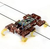 Ấn tượng tốc độ gián robot
